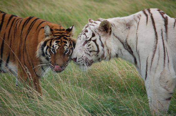http://www.premviaggindia.com/viaggio-in-india-tigre-del-bengala/