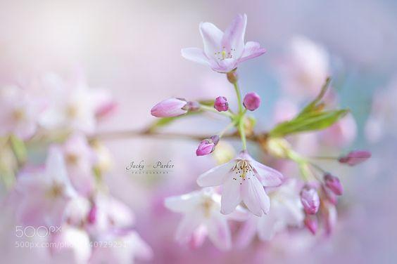 Simply Spring by JackyParker. @go4fotos