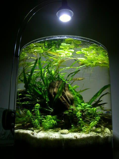 2 gallon pico aquarium gorgeous aquascape plants for Fish for 2 5 gallon tank