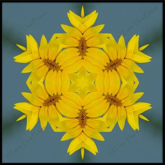 """Sunflower 10 / 8""""x8"""" Mounted on Bevel Board by ILoveThatPicture.etsy.com, $35.00 Sunflower Kaleidoscoped"""