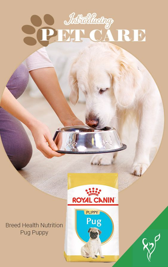 Pin On Pet Care