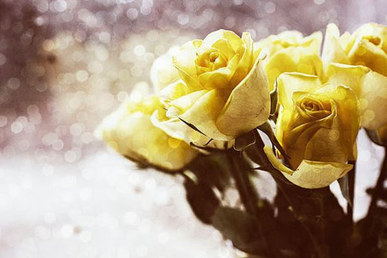 Hey, I found this really awesome Etsy listing at https://www.etsy.com/listing/195451874/yellow-rose-photo-fine-art-print-yellow