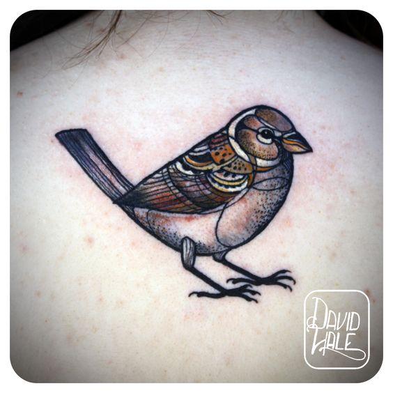 finch tattoo, awesome style | David Hale, Love Hawk Tattoo, Athens, Georgia