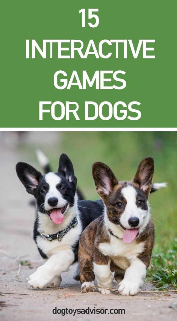 Interactive Games For Dogs Here S 15 Ideas Of Fun Games To Play