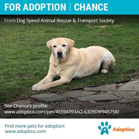 Dog For Adoption Chance Dog Adoption Dogs Pet Adoption