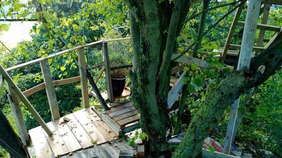 Treehouse Built 25m Above Ground Faces Chop - http://notexactlythenews.com/2014/03/28/really-off-beat/treehouse-built-25m-above-ground-faces-chop/