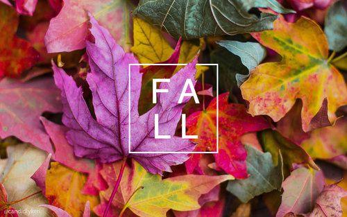 Group Of Leaves Desktop Wallpaper Fall