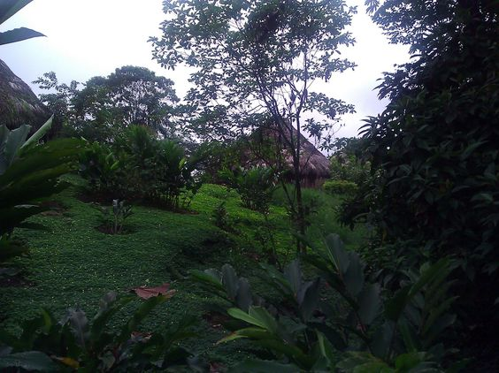 Hidden in the jungle, live many community who are knowledgeable about ancestral medicine