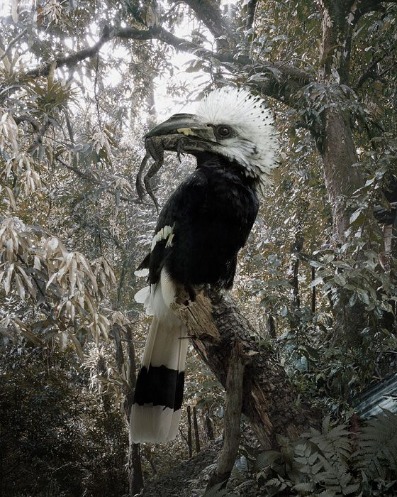 Simen Johan - Until The Kingdom Comes: