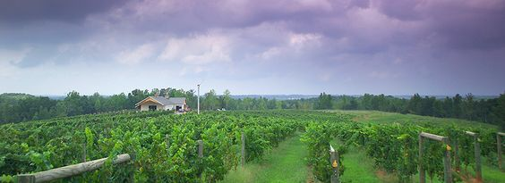Savor wine and mountain views at Owl's Eye Vineyard, just two miles from historic downtown Shelby.