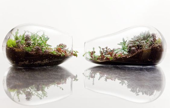 Manatee Terrarium by Botany Factory: Botany Factory is a studio in San Francisco belonging to Katie Goldman Macdonald.