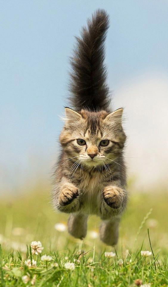 Cat Mid Jump Cute Beautifulcat Adorable Aww Cute Cats Cute Cat Gif