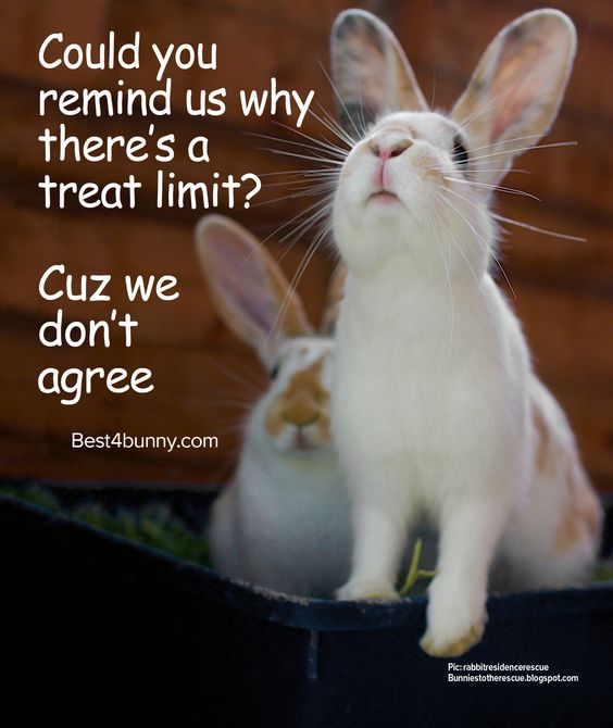 Bunnies sure do love their treats!