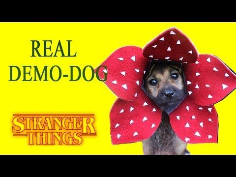 Stranger Things Make Real Demodog With Dog Hat Diy Craft
