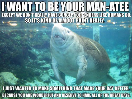manatee quotes Gallery