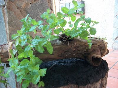 A hollow branch, a pair of funds plastic bottles, natural fiber rope, earth and a plant, it's that easy.