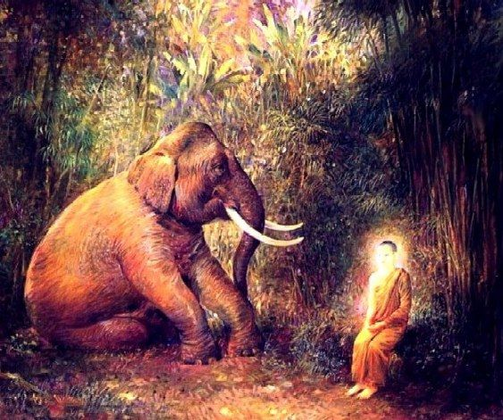 elefants and buddha