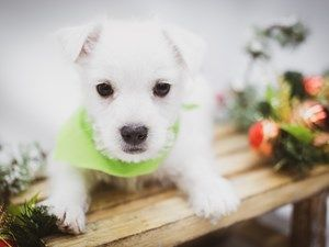 Dogs Puppies For Sale In Wichita Kansas Petland Wichita Pet Store Puppies For Sale Cute Baby Animals Puppies