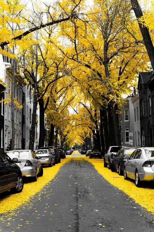 Ondanks dat de kleur geel niet romantisch is, krijg je hier een heel romantisch gevoel van: