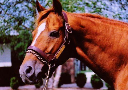 Affirmed…Triple Crown Winner 1978