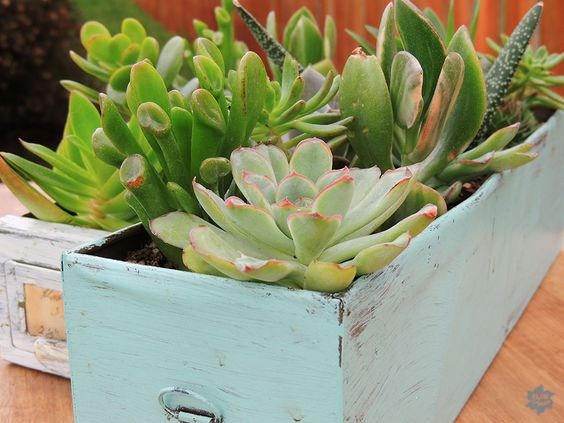 Repurposed card drawers turned #succulent containers