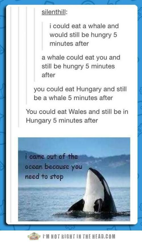 Whale, that escalated quickly...