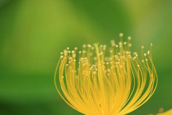 Softly by Toru Shishikura