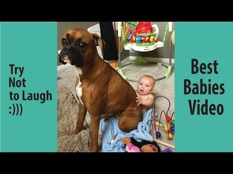Babies Laughing At Boxer Dogs Why Boxers Are The Best Friends