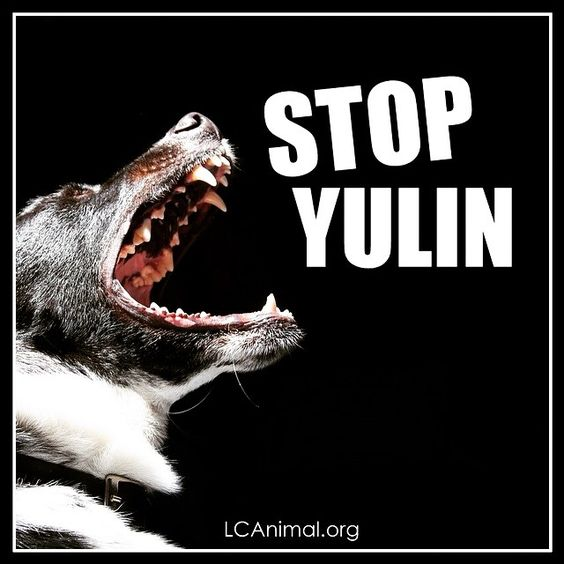 Stop the Yulin Dog Meat Festival Slated for June 21st in Yulin China. #stopyulin2015