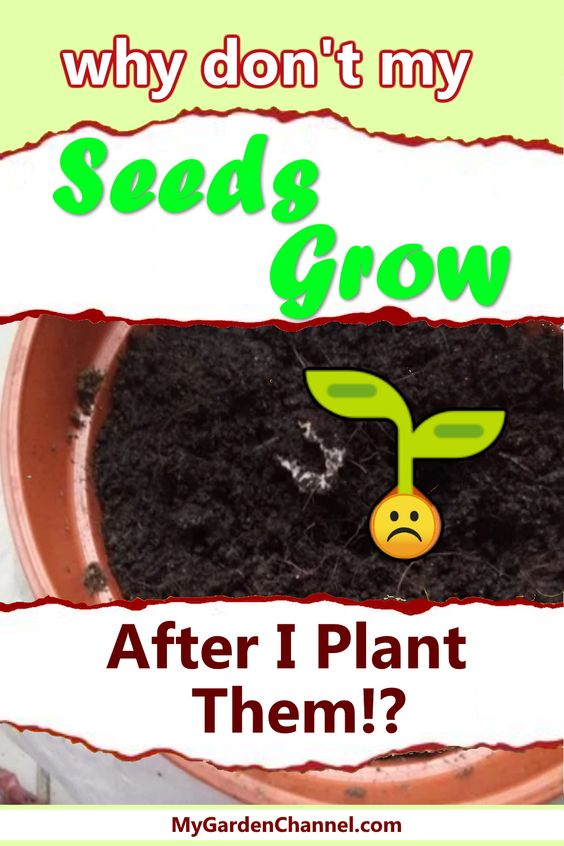 Learn why your seeds do not germinate and grow for you.  It may not be your fault at all! #garden #gardens #gardeners #flowers #plants #vegetables #gardening #howto #seeds #growing