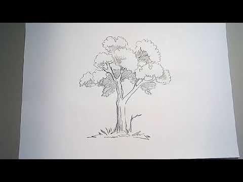Pin Oleh Rifki Zamzam Di Y Menggambar Pohon Cara Menggambar Pohon