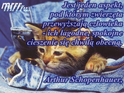 Hakuna.pl - najpiękniejsze sentencje, aforyzmy, cytaty. Motywacja na każdy dzień!
