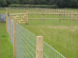 reasonably priced dog proof fencing i can do this. Black Bedroom Furniture Sets. Home Design Ideas