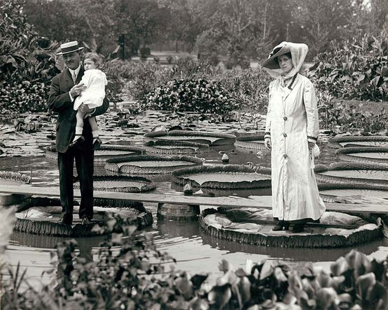 "Couple with child standing on ""Victoria Regina"" water lilies in Tower Grove Park, Missouri, ca. 1900."