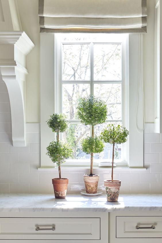 Glorious potted topiary on a kitchen counter in a classic white kitchen. Sarah Bartholomew Traditional Colorful Decor