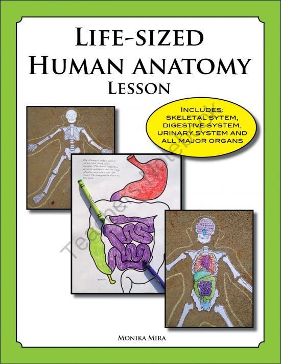 Life size anatomy poster