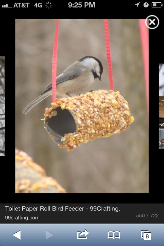 Toilet paper roll covered in peanut butter or honey then rolled on birdseed. You can also use a pipe cleaner for a handle or get fancy and add Popsicle sticks etc for places for the birds to perch :)