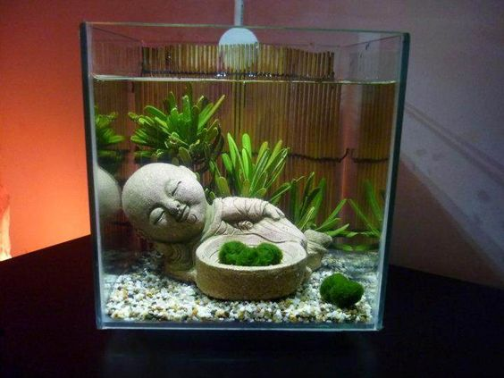 Marimo buddha display oh jee i 39 m contracting the idea for Buddha fish tank
