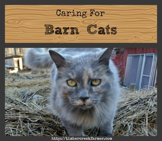 Now that you have the barn, and the barn cats to go with it, how do you care for the outdoor working cat?