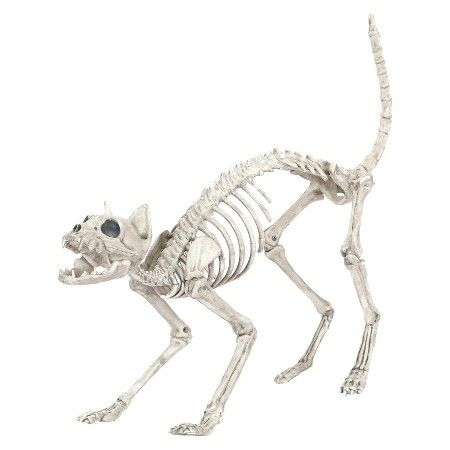 Target: Halloween Cat Skeleton