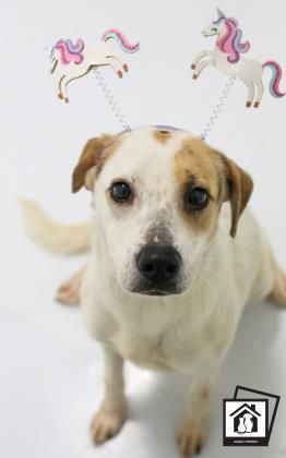 Alia Located In El Paso Tx Has Very Little Time Left To Live Adopt Him Now Dog Love Dog Status Adoption