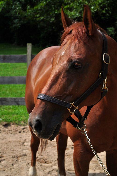 Smarty Pants      2005 Quarter Horse Gelding      ©Equine Gear