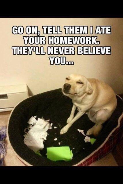 Dog Ate My Homework History Of The Internet - image 4