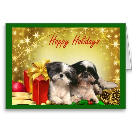 Shih Tzu dog Christmas Cards - Greeting Cards