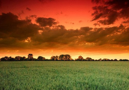 Fields of wonder.