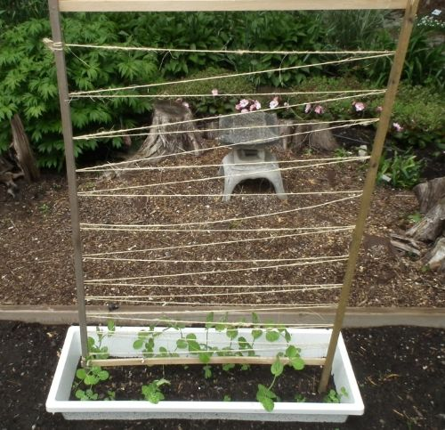Trellis for Peas, Cucumber etc. in Seed Haven