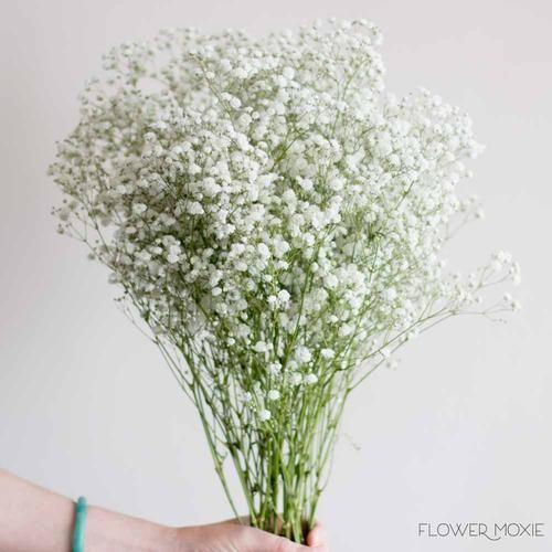 Baby S Breath Flower In 2020 Fresh Wedding Flowers Babys Breath Flowers Wedding Bouquets