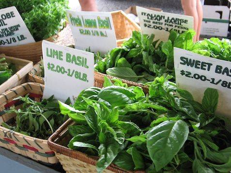 Explore the world of basil....