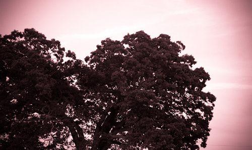 Tree of Hearts by CarolynsHope, via Flickr