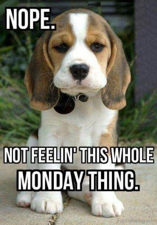 Happy Monday Funny Meme : happy, monday, funny, RANDOM, MEMES, TODAY, FunnyFoto, Funny, Monday, Memes,, Morning, Quotes, Funny,, Humor